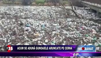 Acum se adună gunoaiele aruncate pe Cerna