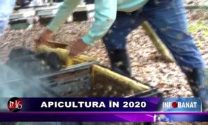 Apicultura în 2020