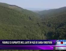 Pădurile cu suprafețe mici, luate în pază de Garda Forestieră