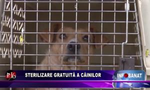 Sterilizare gratuită a câinilor