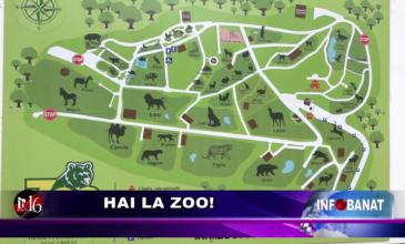 Hai la Zoo!
