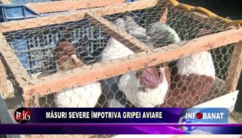 Măsuri severe împotriva gripei aviare