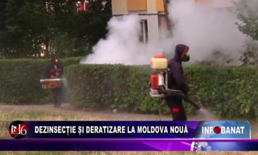 Dezinsecție și deratizare la Moldova Nouă