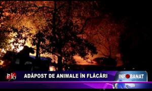 Adăpost de animale în flăcări