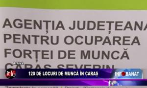 120 de locuri de muncă în Caraș