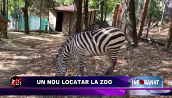 Un nou locatar la Zoo